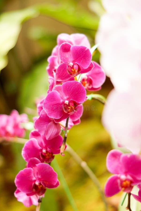 Ιώδες orchid στοκ εικόνες με δικαίωμα ελεύθερης χρήσης