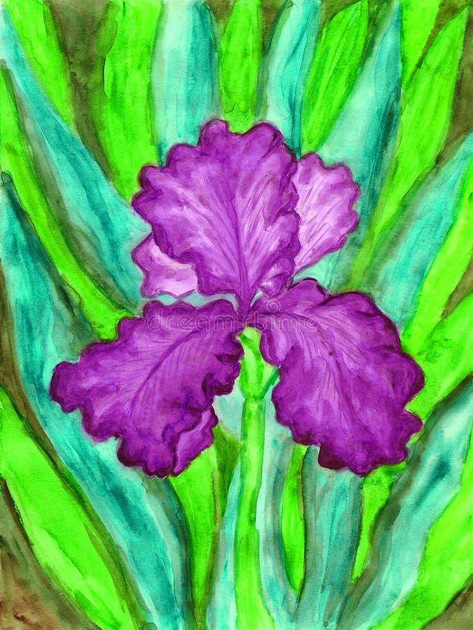Ιώδης ίριδα, ζωγραφική διανυσματική απεικόνιση