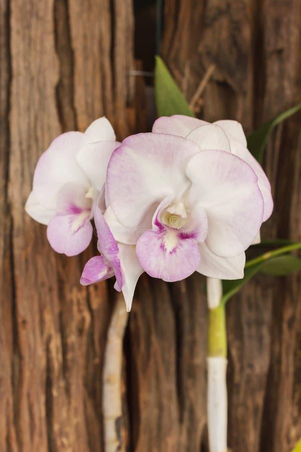 ιώδης και άσπρη δέσμη λουλουδιών ορχιδεών στο ξύλινο υπόβαθρο, άσπρο στοκ φωτογραφίες με δικαίωμα ελεύθερης χρήσης