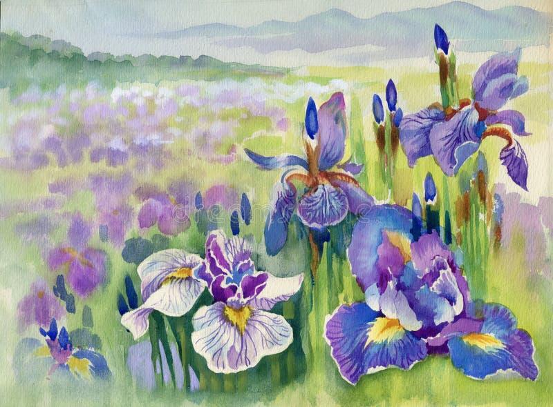 Ιώδη λουλούδια άνοιξη στο βουνό ελεύθερη απεικόνιση δικαιώματος