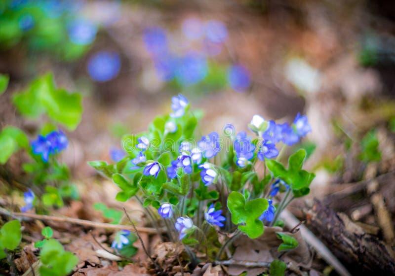 Ιώδη λουλούδια δεσμών στοκ φωτογραφία