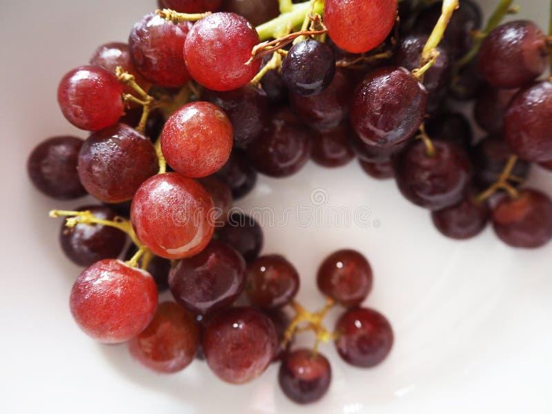 Ιώδη φρούτα σταφυλιών στοκ εικόνες