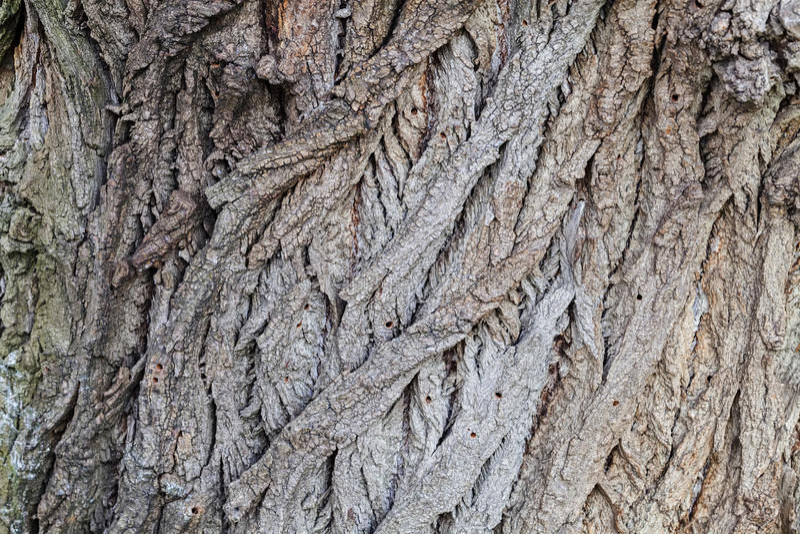 Ιδιαίτερα λεπτομερής σύσταση φλοιών δέντρων στοκ φωτογραφία