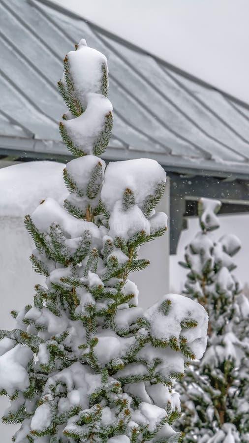 Κάθετα χιονώδη δέντρο και περίπτερο στη χαραυγή Γιούτα που αντιμετωπίζεται μια κρύα χειμερινή ημέρα στοκ εικόνες με δικαίωμα ελεύθερης χρήσης