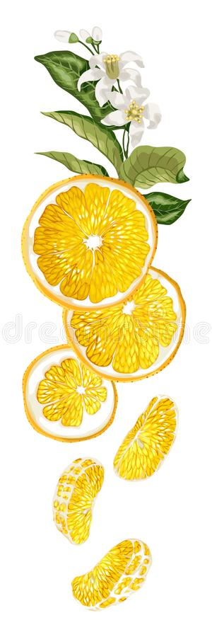 Κάθετη γραμμή ντεκόρ φρούτων με τα πορτοκαλιά μισά φρούτων, φύλλα, ροή διανυσματική απεικόνιση