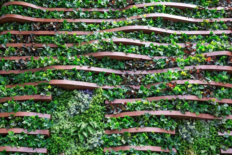 Κάθετη διακόσμηση κήπων στον ξύλινο τοίχο στοκ εικόνα