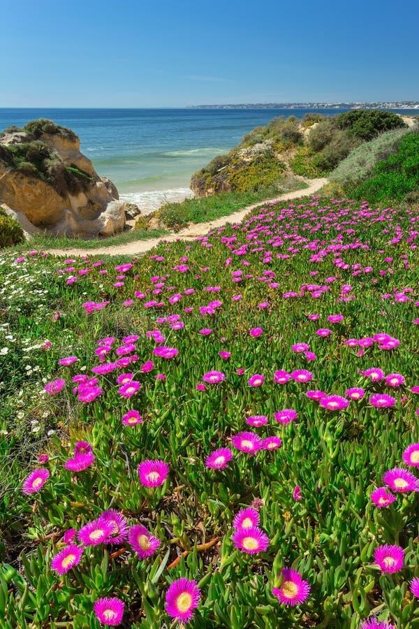 Κάθετη θύελλα παραλιών τοπίων άνοιξη Πορτογαλία στοκ εικόνες με δικαίωμα ελεύθερης χρήσης
