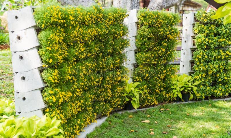 Κάθετος κήπος τοίχων λουλουδιών στοκ φωτογραφία
