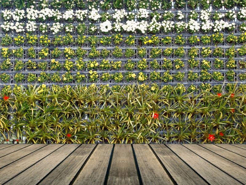 Κάθετος κήπος τοίχων λουλουδιών στοκ φωτογραφία με δικαίωμα ελεύθερης χρήσης
