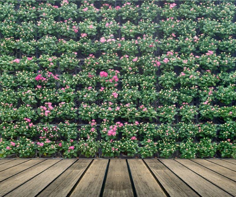 Κάθετος κήπος τοίχων λουλουδιών στοκ φωτογραφίες με δικαίωμα ελεύθερης χρήσης