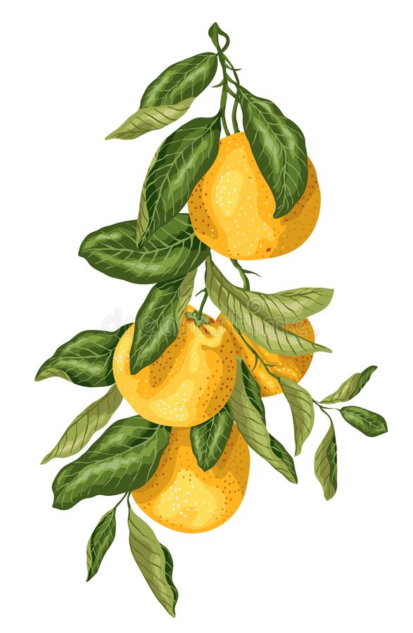 Κάθετος κλάδος με τα πορτοκαλιά φρούτα που γίνονται στο γραφικό σχέδιο με το λ απεικόνιση αποθεμάτων