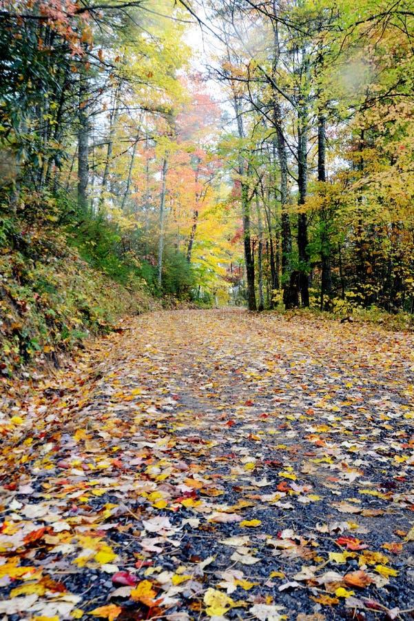 Κάθετος - πεσμένα ζωηρόχρωμα φύλλα σε έναν παλαιό δρόμο βουνών στοκ εικόνες με δικαίωμα ελεύθερης χρήσης