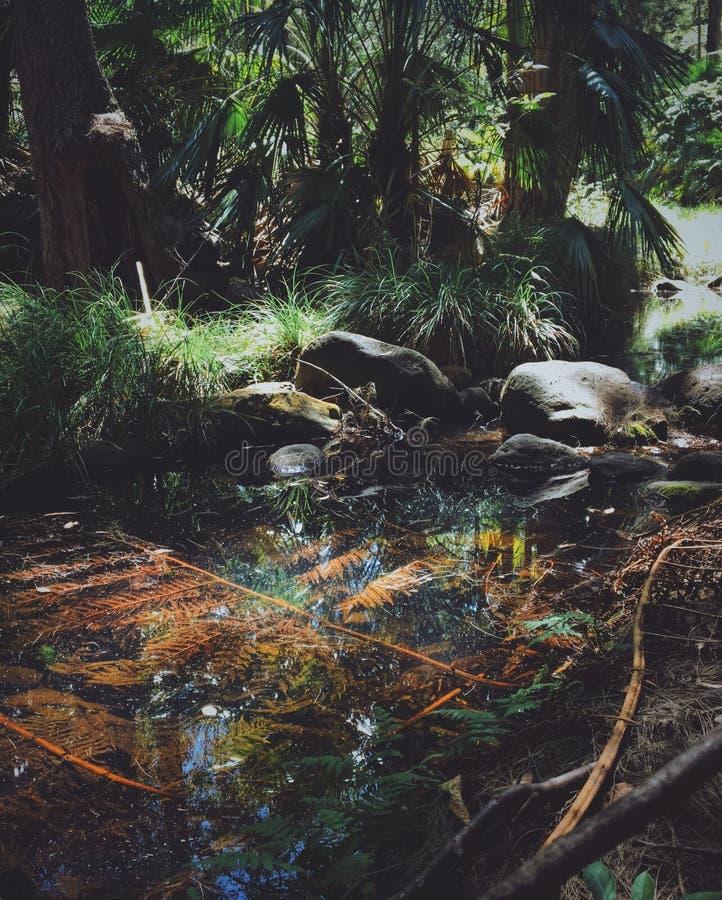 Κάθετος πυροβολισμός μιας λίμνης με τις εγκαταστάσεις που αυξάνονται κοντά σε ένα δάσος στοκ φωτογραφίες