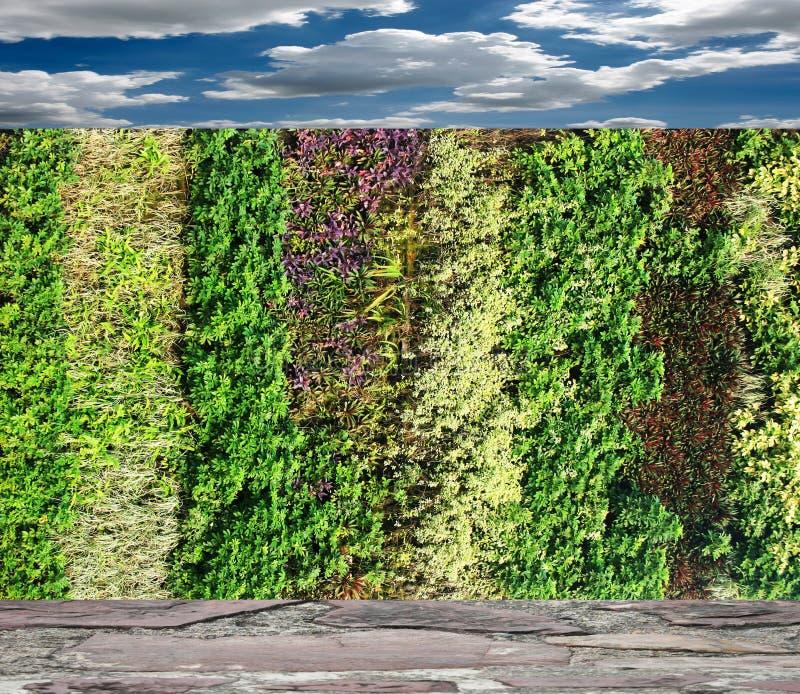 Κάθετος τοίχος κήπων λουλουδιών στοκ φωτογραφίες με δικαίωμα ελεύθερης χρήσης