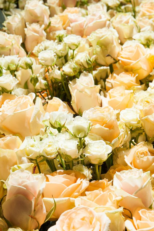 Κάθετο σχέδιο των άσπρων τριαντάφυλλων στοκ εικόνα με δικαίωμα ελεύθερης χρήσης