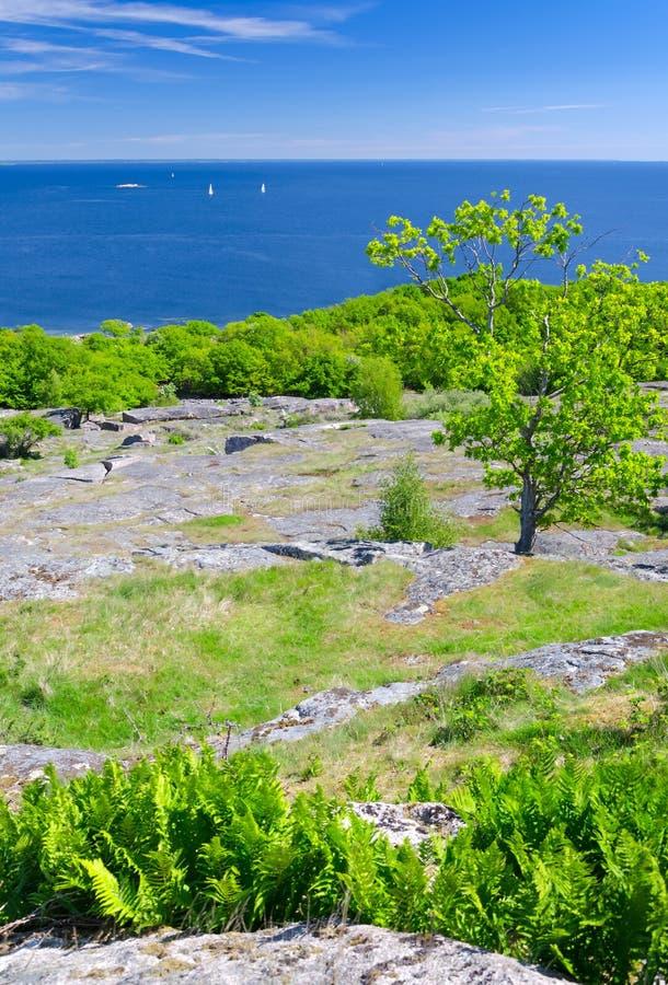 Κάθετο τοπίο της σουηδικής εποχής παραλιών την άνοιξη στοκ φωτογραφίες