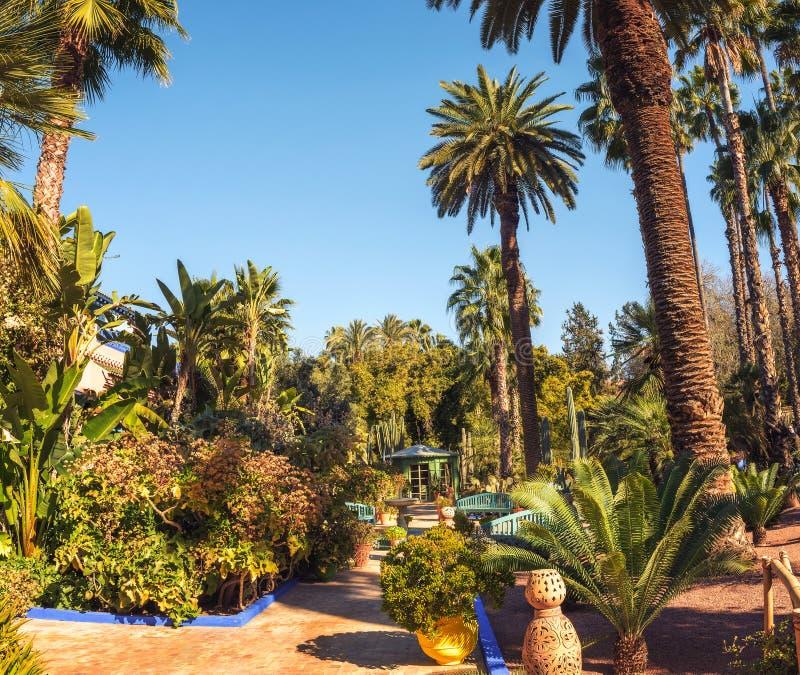 Κάκτοι και φοίνικες στο βοτανικό κήπο Jardin Majorelle στο Μαρακές στοκ εικόνες