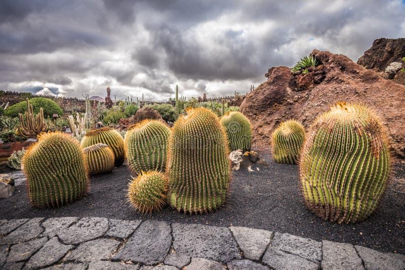Κάκτοι στον κήπο κάκτων, Lanzarote, Κανάρια νησιά, Ισπανία στοκ φωτογραφία με δικαίωμα ελεύθερης χρήσης