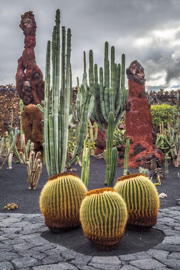 Κάκτοι στον κήπο κάκτων, Lanzarote, Κανάρια νησιά, Ισπανία στοκ εικόνες
