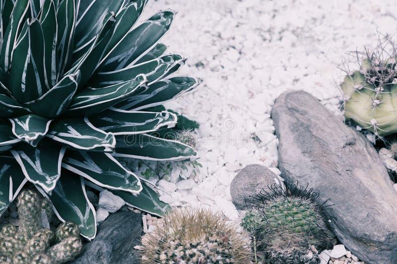 Κάκτοι στον κήπο στη χλωμή εικόνα σκιών Φωτογραφία εγκαταστάσεων ερήμων στοκ εικόνες