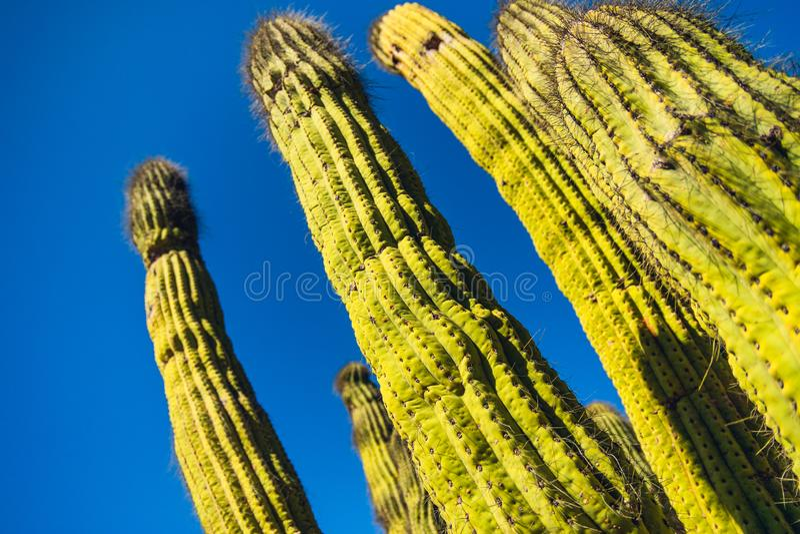 Κάκτοι, Catalina Island, Καλιφόρνια στοκ φωτογραφία με δικαίωμα ελεύθερης χρήσης