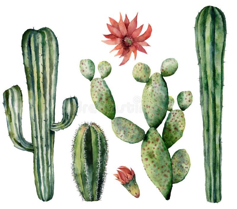 Κάκτοι Watercolor που τίθενται με το λουλούδι Χρωματισμένες χέρι εγκαταστάσεις επιδορπίων με τα λουλούδια που απομονώνονται στο ά διανυσματική απεικόνιση
