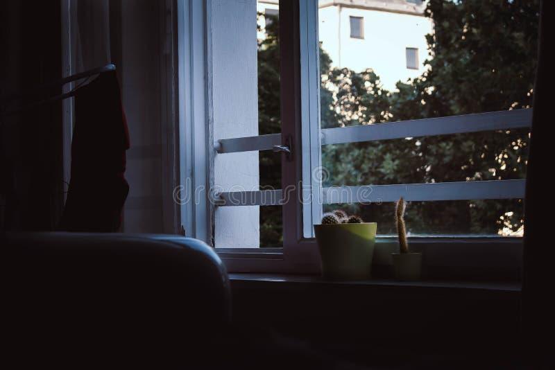 Κάκτος σε ένα παράθυρο με τις ακτίνες ήλιων στοκ εικόνα με δικαίωμα ελεύθερης χρήσης
