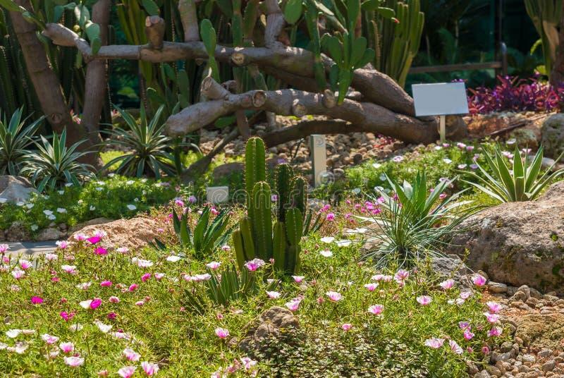 Κάκτος στη μέση των ανθίζοντας φυτών στοκ εικόνες με δικαίωμα ελεύθερης χρήσης