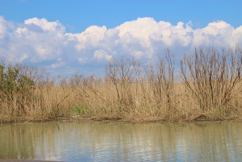 Κάλαμοι και ελώδης περιοχή στο Po del επιφύλαξης φύσης του δέλτα Di Βένετο Ιταλία στοκ φωτογραφίες με δικαίωμα ελεύθερης χρήσης