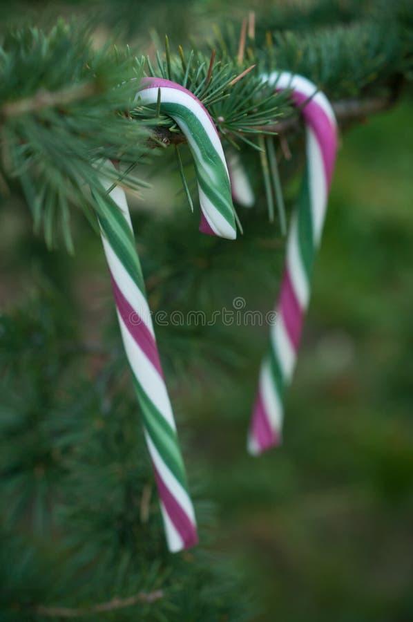 Κάλαμοι καραμελών στο χριστουγεννιάτικο δέντρο στοκ φωτογραφία