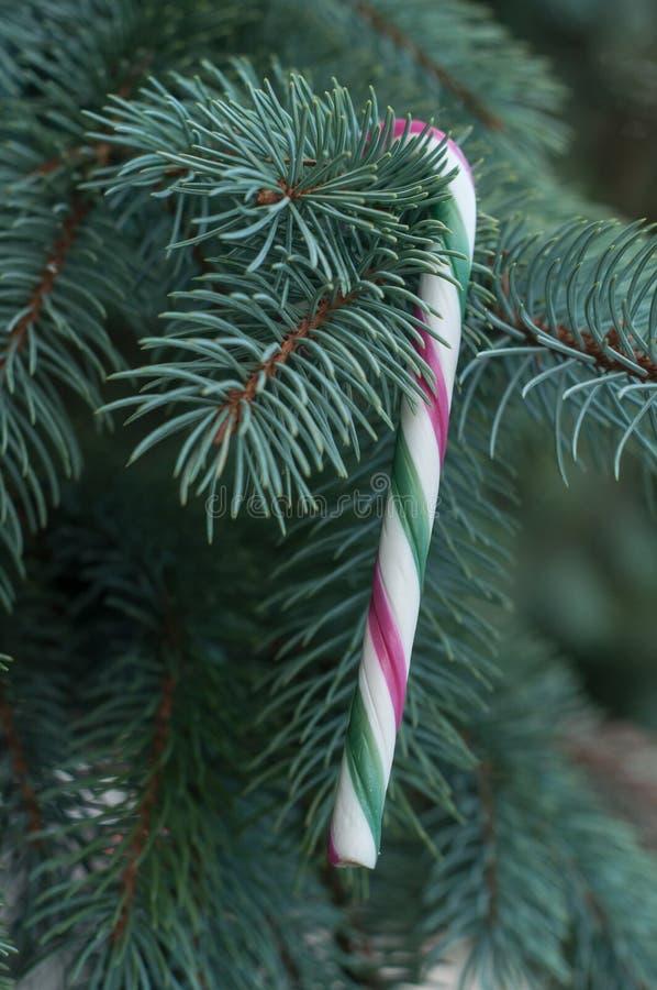 Κάλαμοι καραμελών στο χριστουγεννιάτικο δέντρο στοκ φωτογραφία με δικαίωμα ελεύθερης χρήσης
