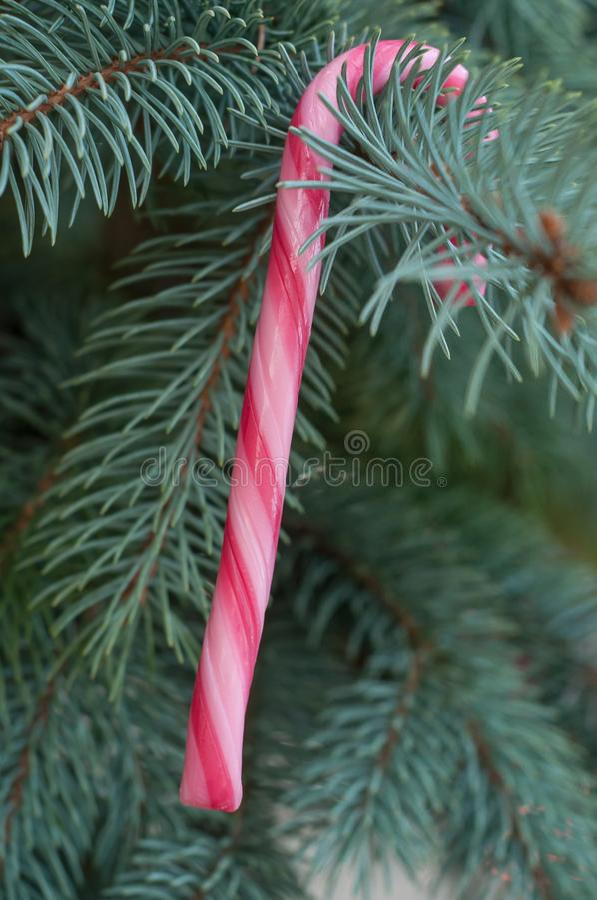 Κάλαμοι καραμελών στο χριστουγεννιάτικο δέντρο στοκ φωτογραφίες