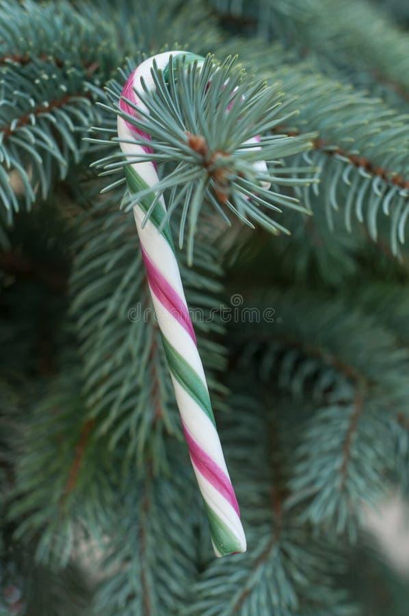 Κάλαμοι καραμελών στο χριστουγεννιάτικο δέντρο στοκ εικόνες με δικαίωμα ελεύθερης χρήσης