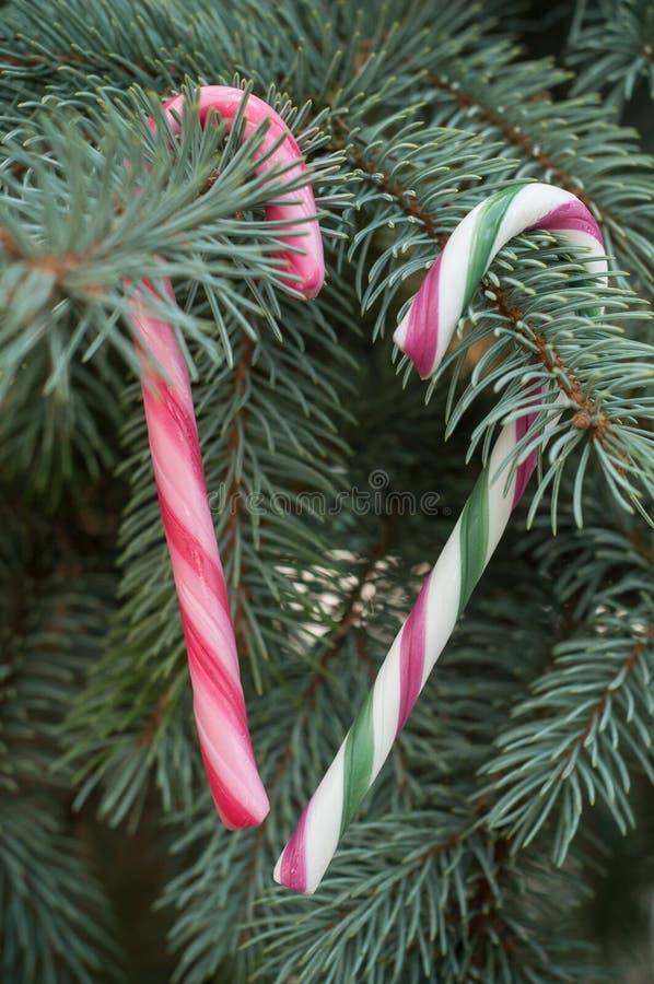 Κάλαμοι καραμελών στο χριστουγεννιάτικο δέντρο στοκ εικόνες