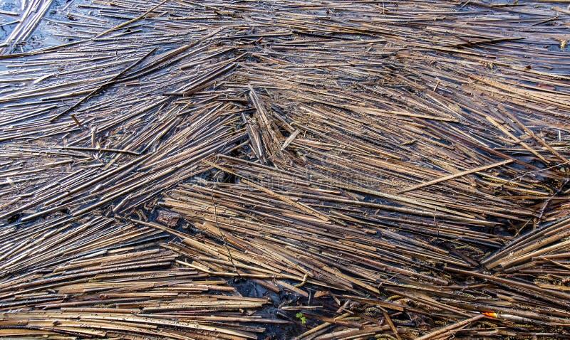 Κάλαμοι που επιπλέουν σε μια λίμνη στοκ εικόνες