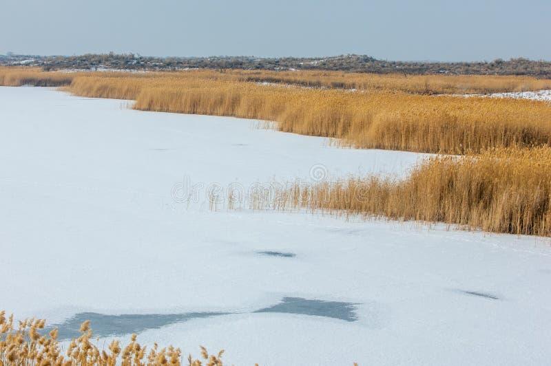 Κάλαμοι σε μια παγωμένη λίμνη, η στέπα ο ποταμός ή Καζακστάν Kap στοκ εικόνα με δικαίωμα ελεύθερης χρήσης