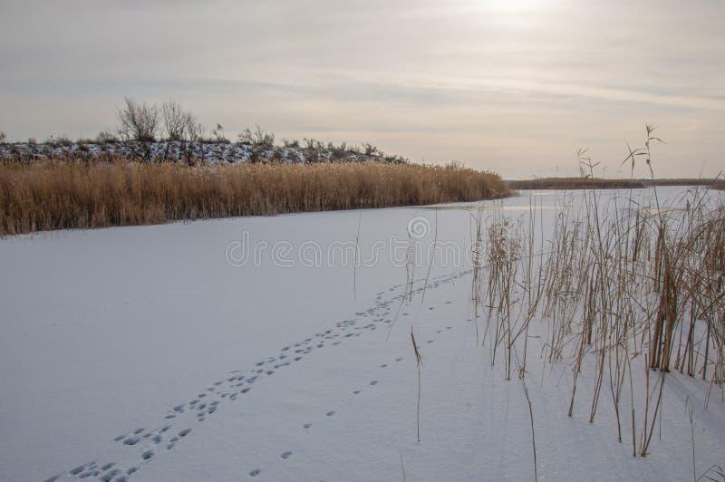 Κάλαμοι σε μια παγωμένη λίμνη, η στέπα ο ποταμός ή Καζακστάν Kap στοκ φωτογραφία με δικαίωμα ελεύθερης χρήσης