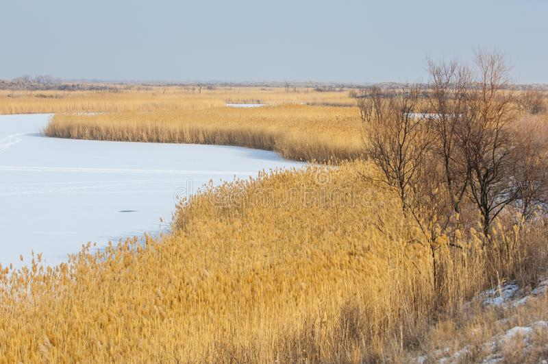 Κάλαμοι σε μια παγωμένη λίμνη, η στέπα ο ποταμός ή Καζακστάν Kap στοκ εικόνες με δικαίωμα ελεύθερης χρήσης