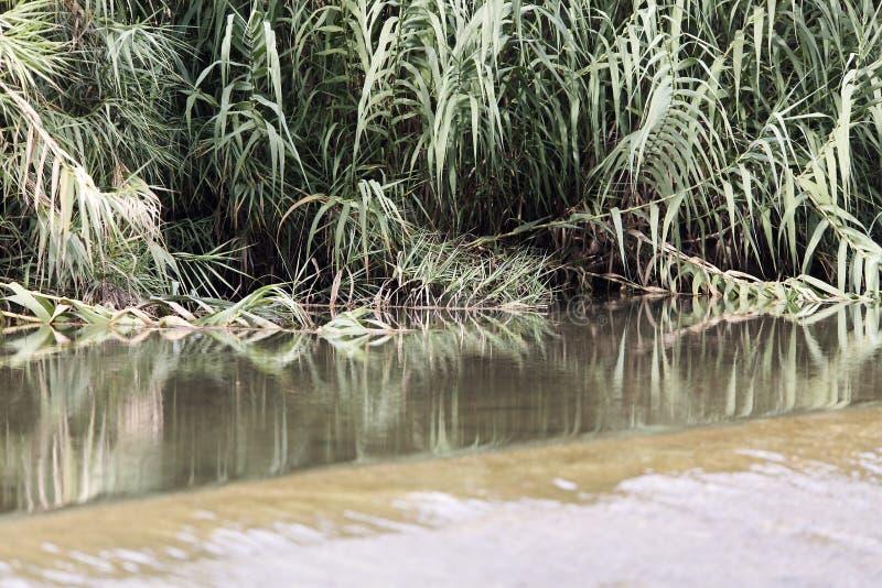 Κάλαμοι στην κλίση του κόσμου ποταμών στοκ εικόνα