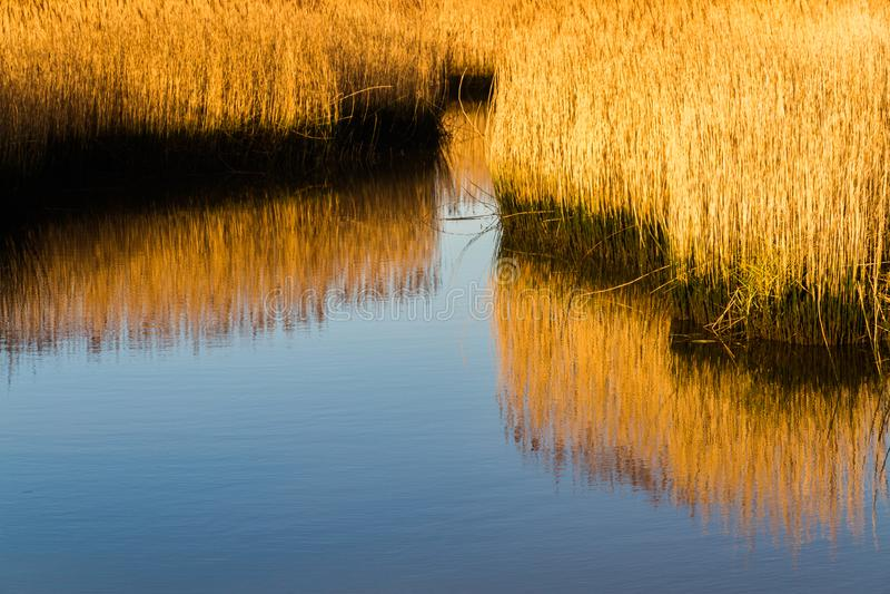 Κάλαμοι στο κανάλι θαλάσσιου νερού, φως πρωινού στοκ εικόνες