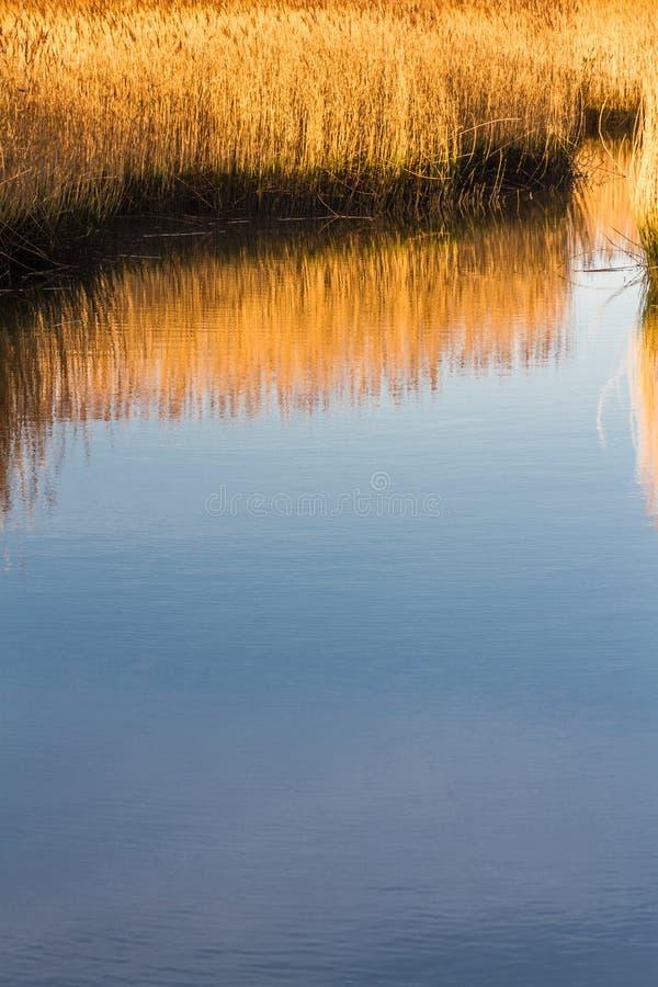 Κάλαμοι στο κανάλι θαλάσσιου νερού, φως πρωινού στοκ φωτογραφία με δικαίωμα ελεύθερης χρήσης