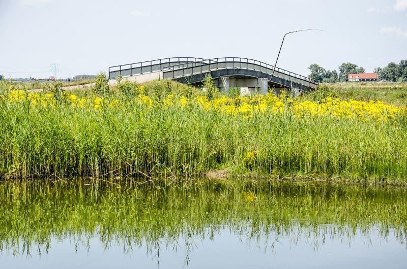 Κάλαμοι, wildflowers και συγκεκριμένη γέφυρα στοκ φωτογραφίες