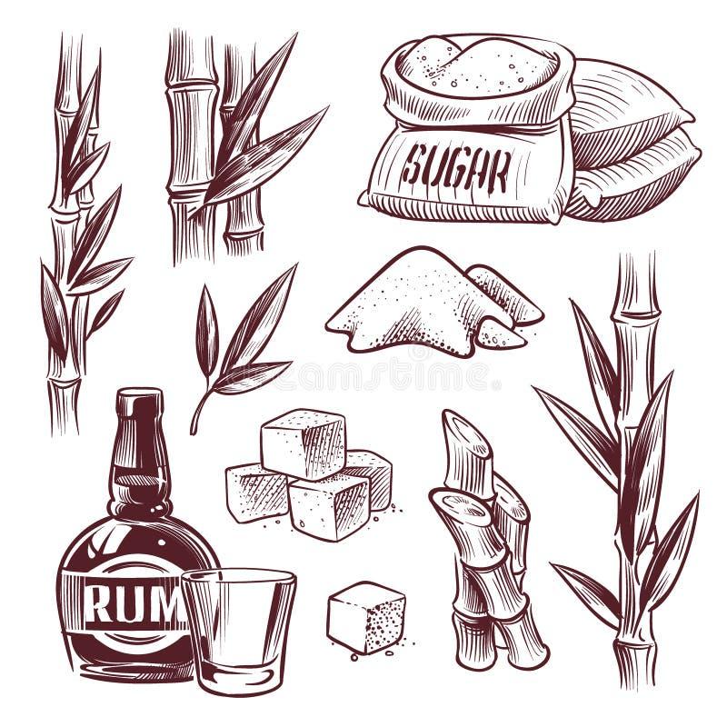 Κάλαμος ζάχαρης σκίτσων Γλυκό φύλλο ζαχαροκάλαμων, μίσχοι φυτών ζάχαρης, γυαλί ποτών ρουμιού και μπουκάλι Χέρι κατασκευής ζάχαρης διανυσματική απεικόνιση