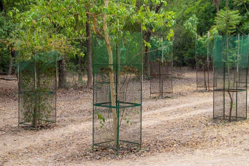 Κάλυψη προστάτη εγκαταστάσεων δέντρων στοκ φωτογραφίες με δικαίωμα ελεύθερης χρήσης