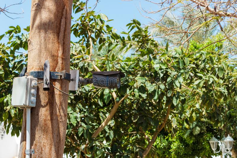 Κάμερα ασφαλείας στο μέτωπο των φοινίκων η υψηλή απεικόνιση CCTV φωτογραφικών μηχανών ανασκόπησης απομόνωσε το ποιοτικό λευκό στοκ φωτογραφία με δικαίωμα ελεύθερης χρήσης
