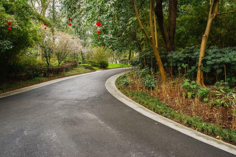 Κάμπτοντας δρόμος ασφάλτου στις verdant εγκαταστάσεις της άνοιξη στοκ εικόνες