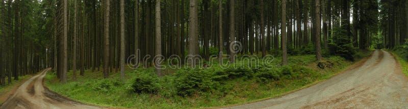 Κάμψη στο δασικό δρόμο ασφάλτου στο κομψό δάσος δέντρων στοκ φωτογραφία με δικαίωμα ελεύθερης χρήσης
