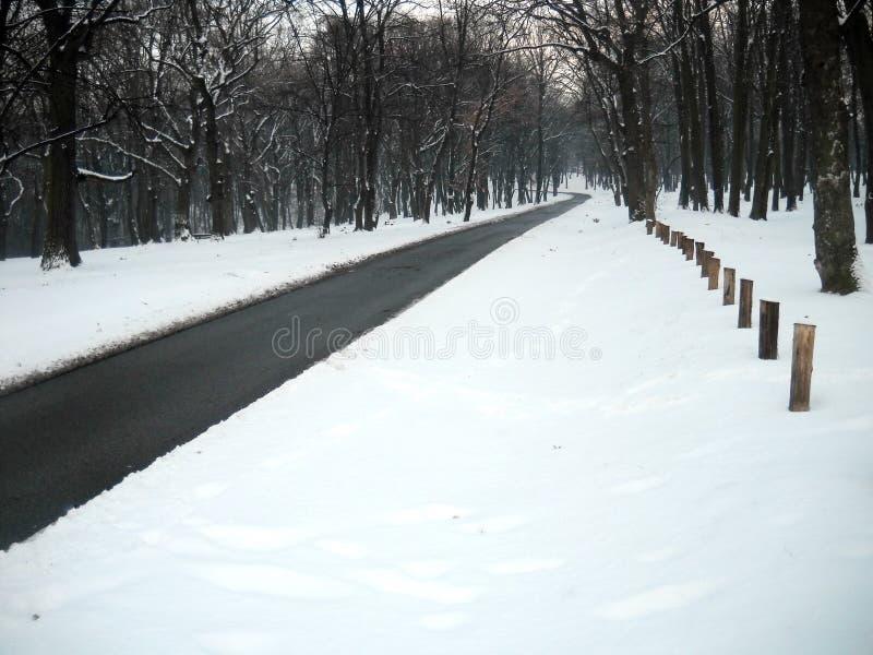 Κάμψη στο δρόμο μέσω του δάσους και του χιονιού στοκ εικόνα