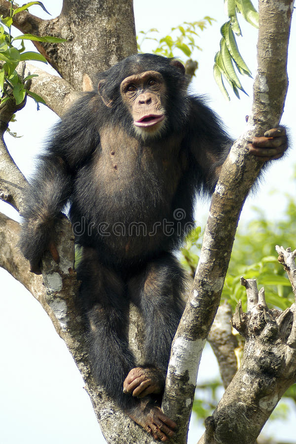 κάνετε τον πίθηκο βλέπει στοκ φωτογραφία με δικαίωμα ελεύθερης χρήσης