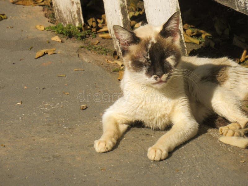 Κάνοντας ηλιοθεραπεία μαύρη επισημασμένη άσπρη γάτα, με τα κλειστά βλέφαρα και τα όπλα που στηρίζονται στο έδαφος στοκ εικόνα με δικαίωμα ελεύθερης χρήσης
